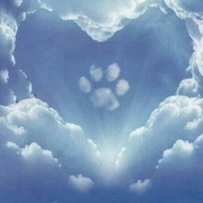 Pet Loss and Bereavement - Pet Owner Resources - Chapel Hill, NC