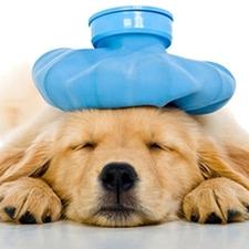 Pet Health Insurance - Pet Owner Resources - Chapel Hill, NC