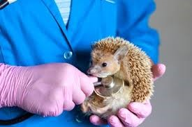 Avian and Exotics - Veterinary Services - Chapel Hill, NC